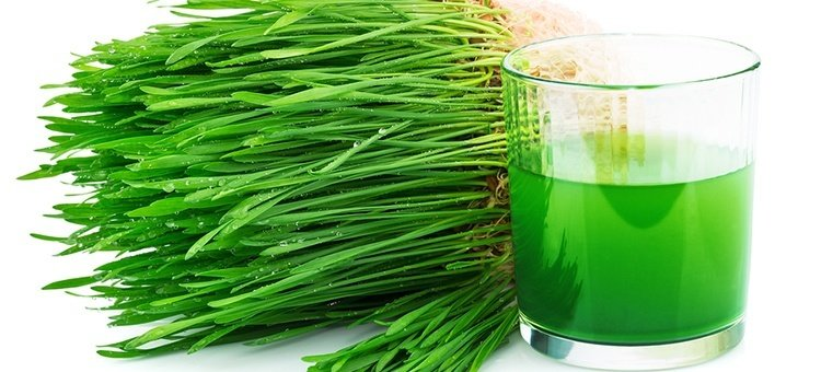 Health-Benefits-of-Juicing-Wheatgrass.jpg