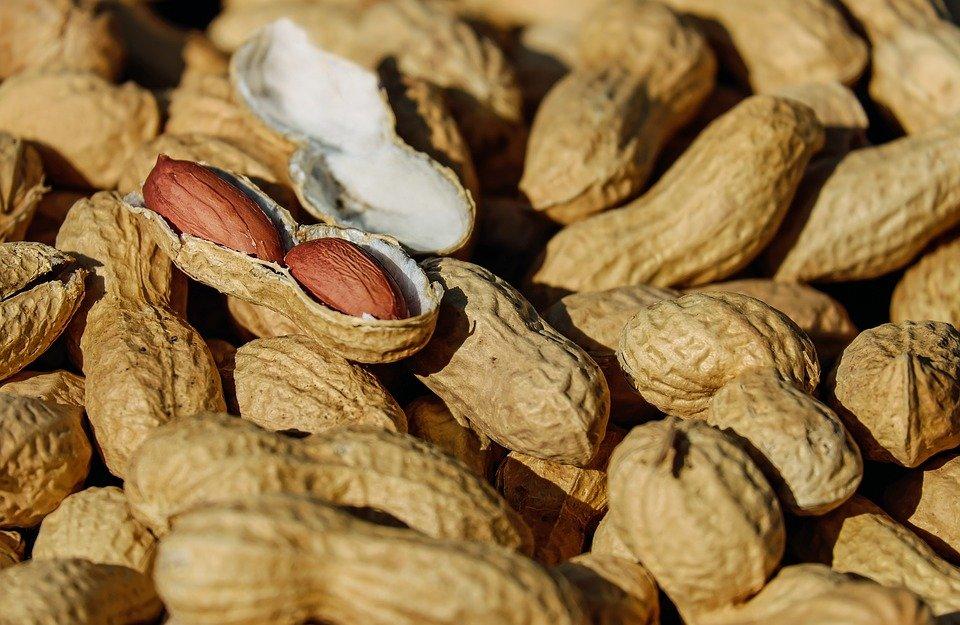 nuts-1.jpg