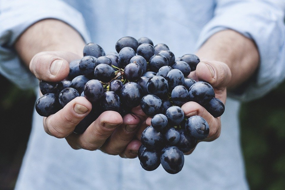 Resveratrol-Secret-Health-Benefits-From-Grapes.jpg