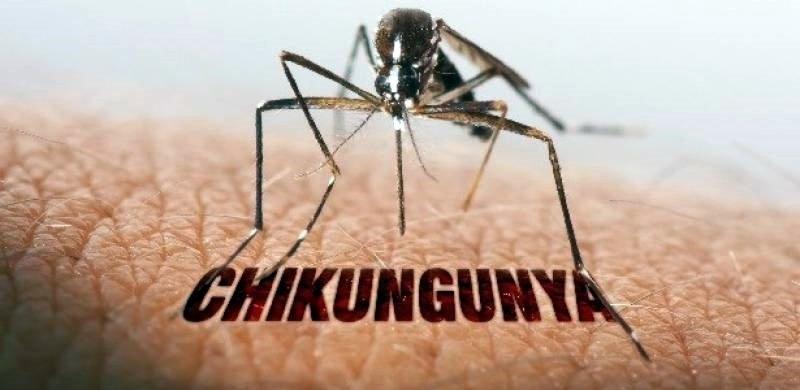 chikungunya-3-1.jpg
