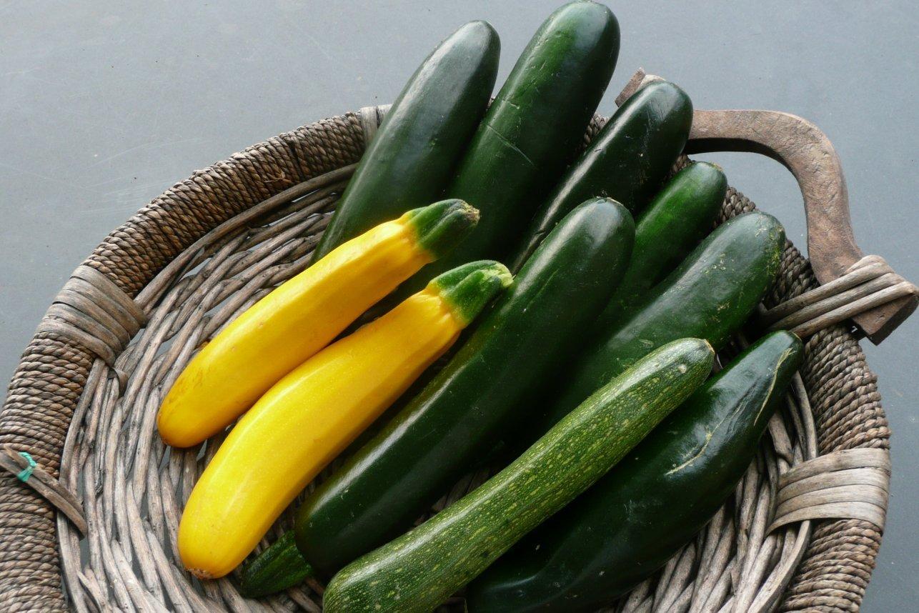 zucchini-2.jpg