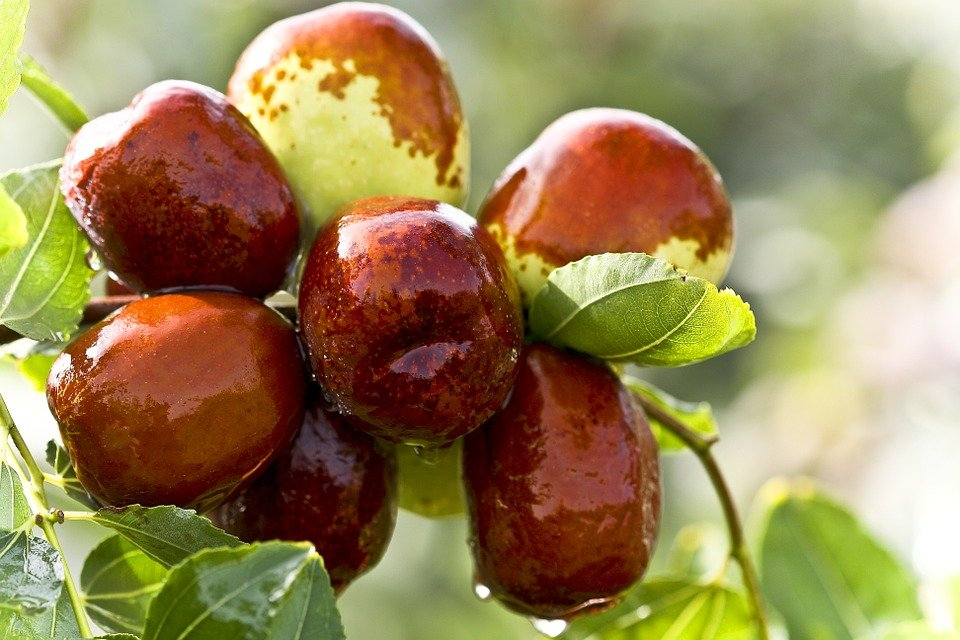 7-Health-Benefits-of-Dates-Fruits.jpg