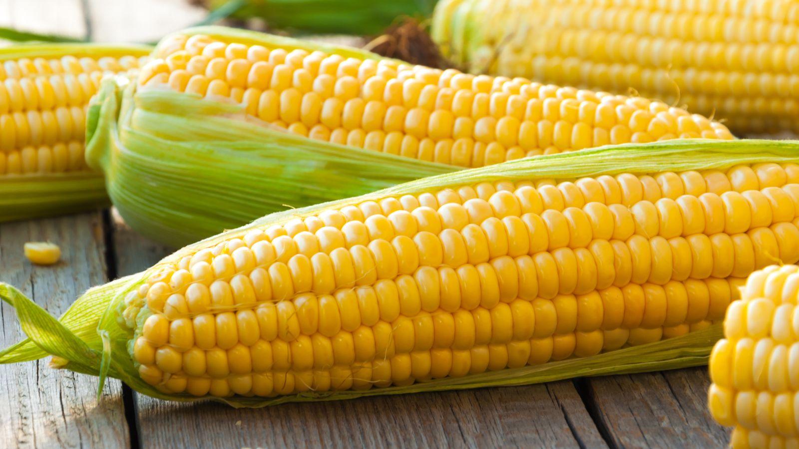 corn-3.jpg