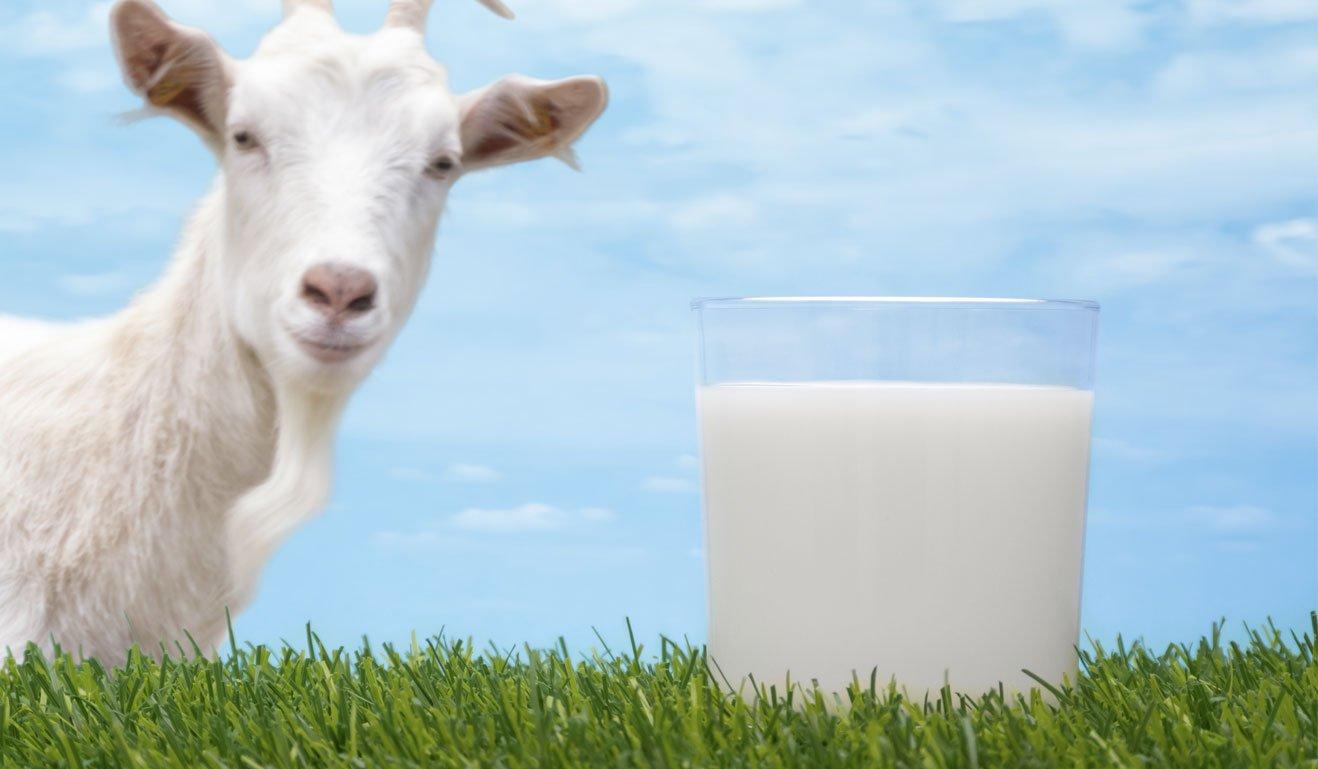 goat-milk-1.jpg