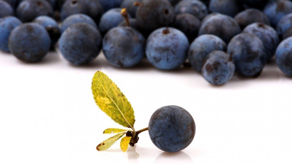 Maqui Berry For Weight Loss Is It Really Effective 2020 Health
