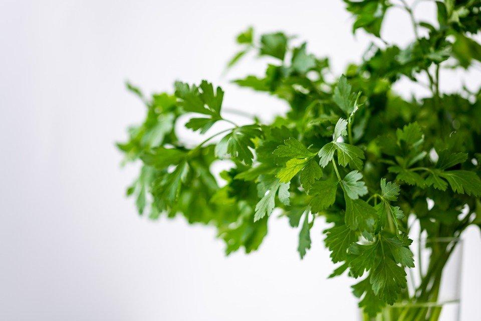 Parsley, Green, Healthy, Eat, Plant, Food, Fresh