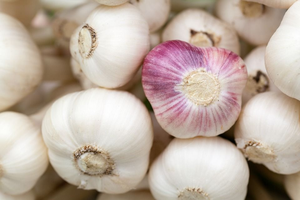 6-Benefits-of-Garlic.jpg