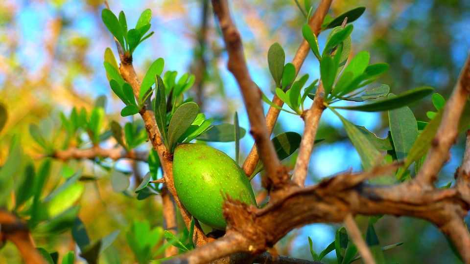 argan-oil-1.jpg