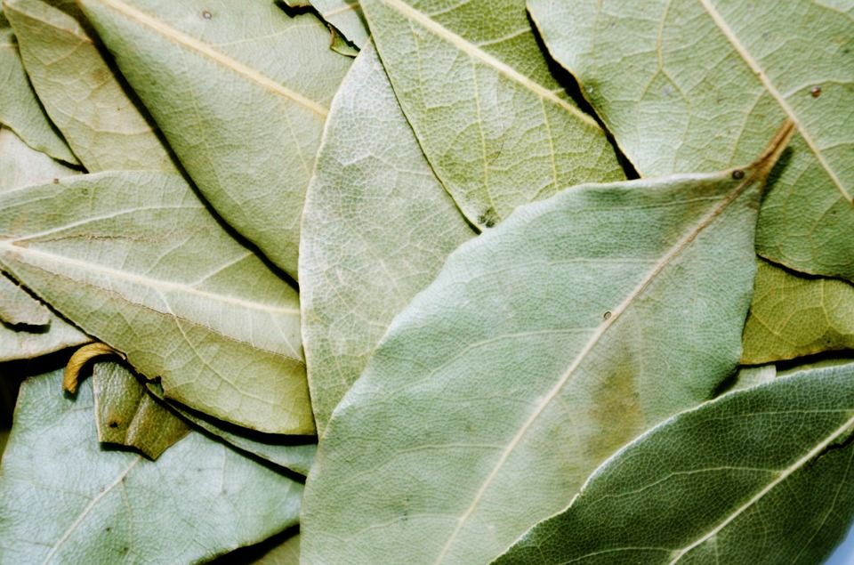bay-leaves-1.jpg