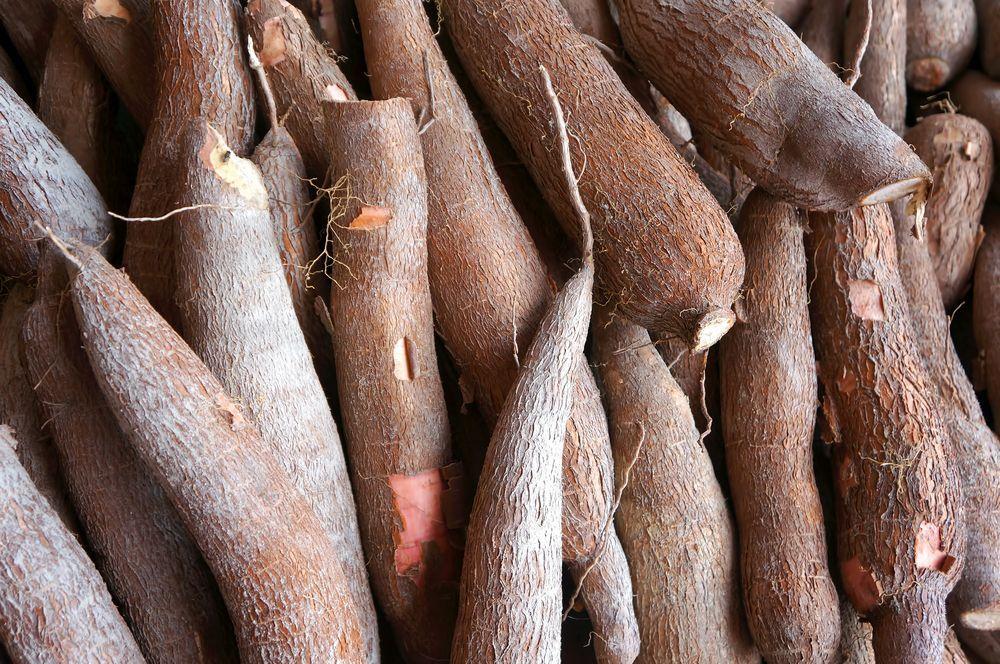 manioc-1.jpg