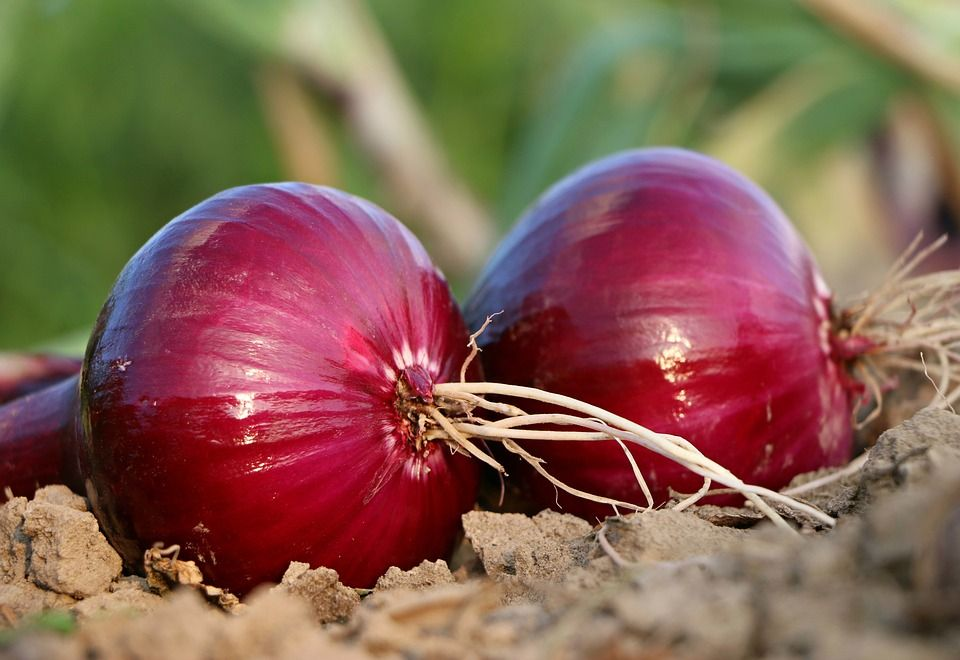 onions-for-hair-growth-3.jpg